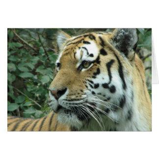 Tigre siberiano tarjeta de felicitación