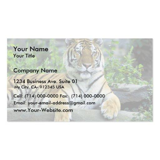 Tigre, siberiano tarjetas de visita