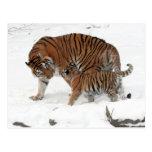 Tigre siberiano y Cub Postal