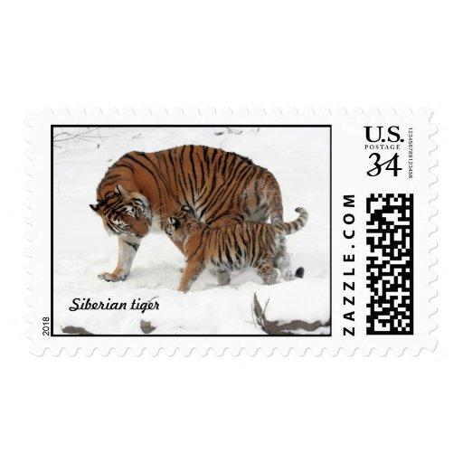 Tigre siberiano y Cub Sellos
