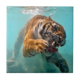Tigre subacuático azulejo cuadrado pequeño