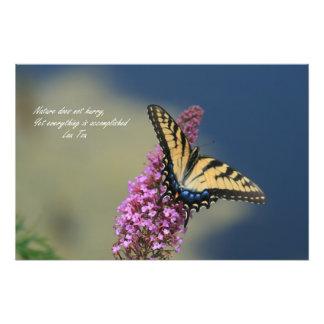 Tigre Swallowtail Cojinete