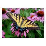 Tigre Swallowtail de la mariposa Tarjetas