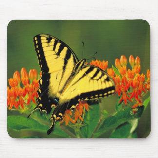 Tigre Swallowtail en el cojín de ratón de la mala Mouse Pads