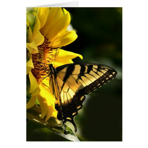 Tigre Swallowtail Felicitación