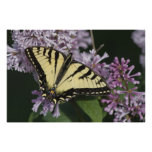 Tigre Swallowtail Impresiones