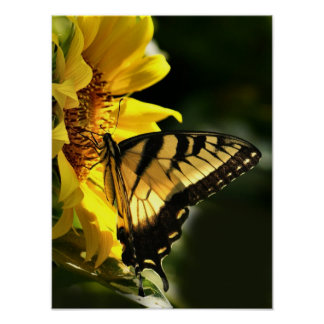 Tigre Swallowtail Póster