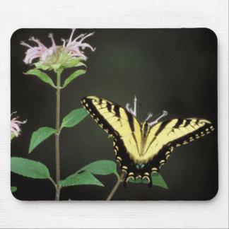 Tigre Swallowtail Alfombrilla De Ratones