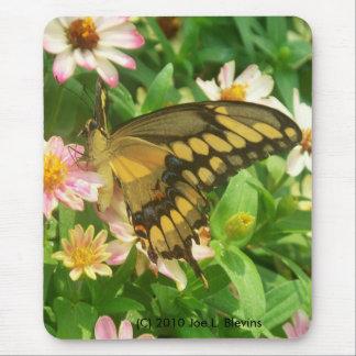 Tigre Swallowtail Alfombrilla De Ratón