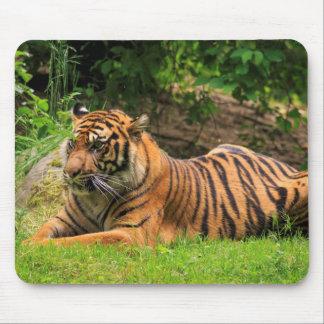 Tigre Tapete De Ratones