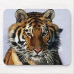 tigre tapetes de raton