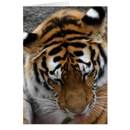 Tigre Tarjeta De Felicitación