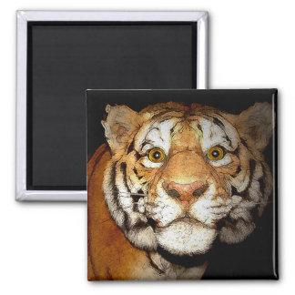 Tigre, tigre en la noche II Imán Cuadrado