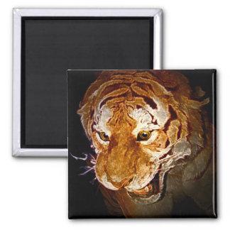 Tigre, tigre en la noche… imán cuadrado