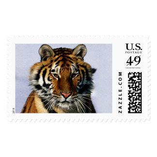 tigre timbre postal