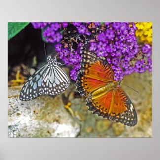 Tigre vidrioso y mariposas rojas del Lacewing Poster