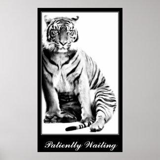 Tigre, Waiting_ Poster