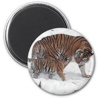Tigre y cachorro en el imán hermoso de la foto de
