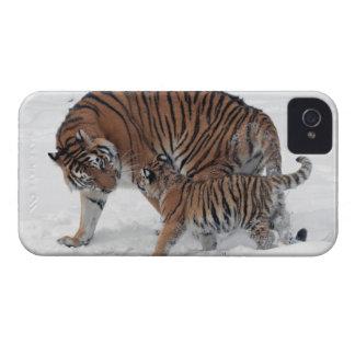 Tigre y cachorro en la foto hermosa de la nieve, funda para iPhone 4