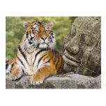 Tigre y el Buda Postal