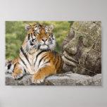 Tigre y el Buda Posters