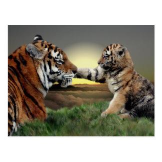 Tigre y postal de Cub