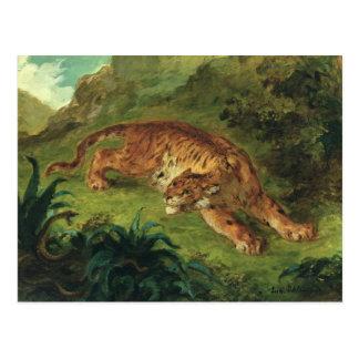 Tigre y serpiente 1858 tarjetas postales