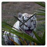Tigres blancos 6170e relojes de pared