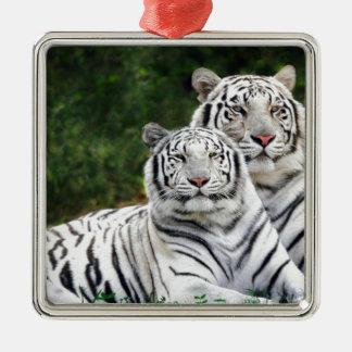 Tigres blancos adorno cuadrado plateado