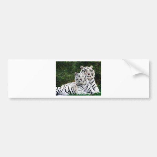 Tigres blancos etiqueta de parachoque