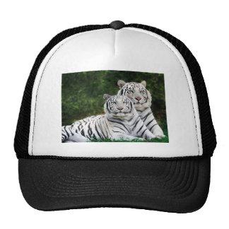 Tigres blancos hermosos gorra