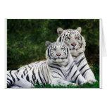 Tigres blancos hermosos tarjetón