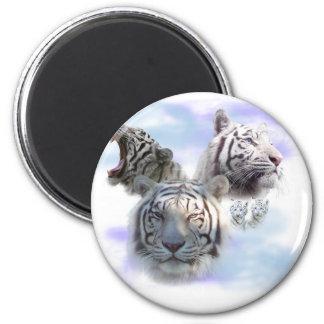 Tigres blancos imán redondo 5 cm