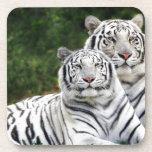 Tigres blancos posavasos de bebida