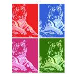 Tigres coloridos postal