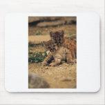 Tigres de bebé lindos tapete de ratón