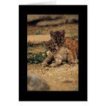 Tigres de bebé lindos tarjeta