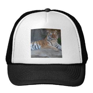 Tigres de Bengala Gorros
