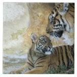 Tigres de Bengala que se relajan Azulejo Cuadrado Grande