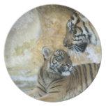 Tigres de Bengala que se relajan Plato Para Fiesta