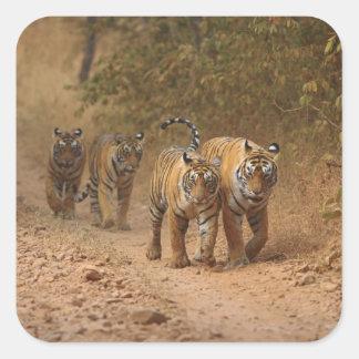 Tigres de Bengala reales en el movimiento, Colcomanias Cuadradas Personalizadas