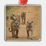 Tigres de Bengala reales en la pista, Ranthambhor  Ornamente De Reyes