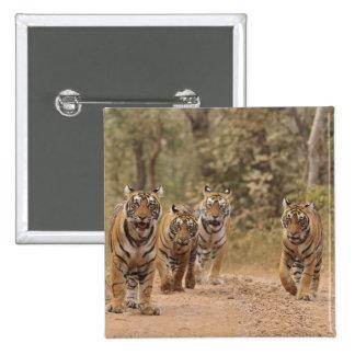Tigres de Bengala reales en la pista, Ranthambhor  Pins