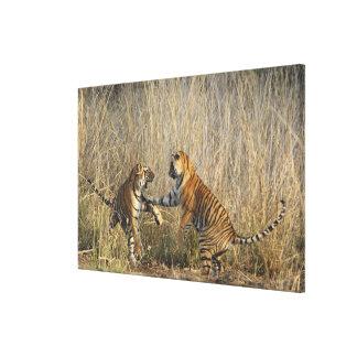 Tigres de Bengala reales juego-que luchan, Rantham Lona Estirada Galerias