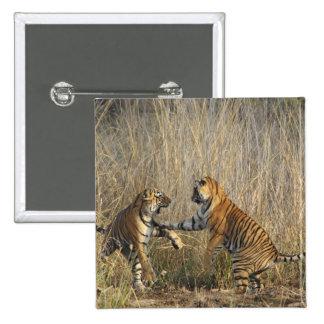 Tigres de Bengala reales juego-que luchan, Rantham Pin Cuadrada 5 Cm
