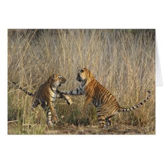 Tigres de Bengala reales juego-que luchan, Rantham Tarjeton