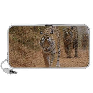 Tigres de Bengala reales que caminan a lo largo de Mp3 Altavoces