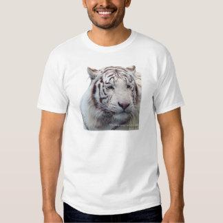 Tigres de desaparición playera