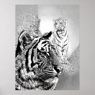 Tigres del parque zoológico impresiones