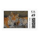 Tigres en cueva sellos